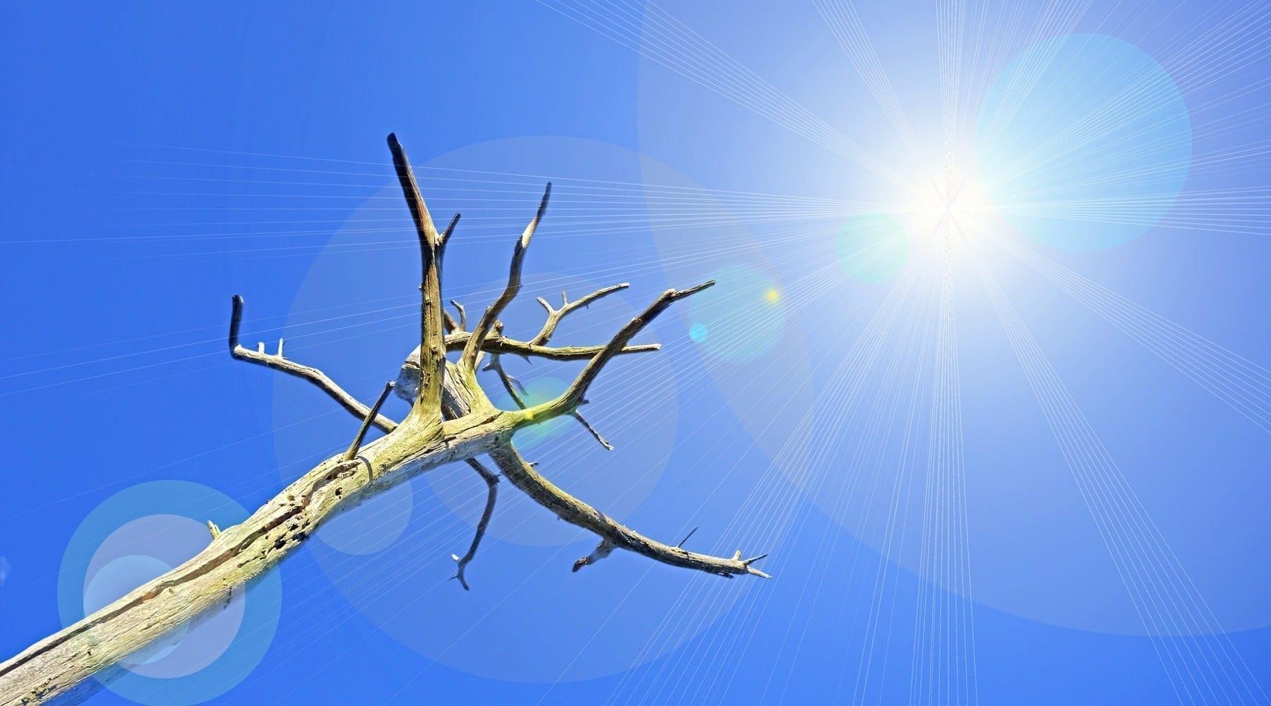 Dead tree in the sunlight