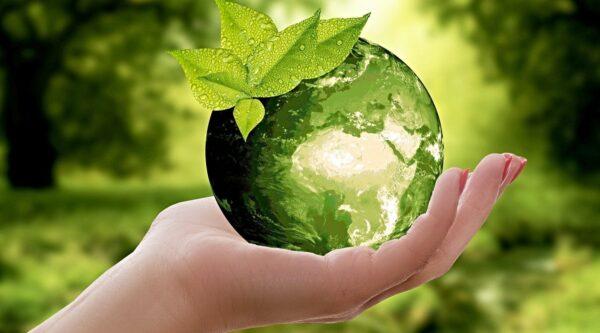 Hand holding a verdant globe amid green foliage