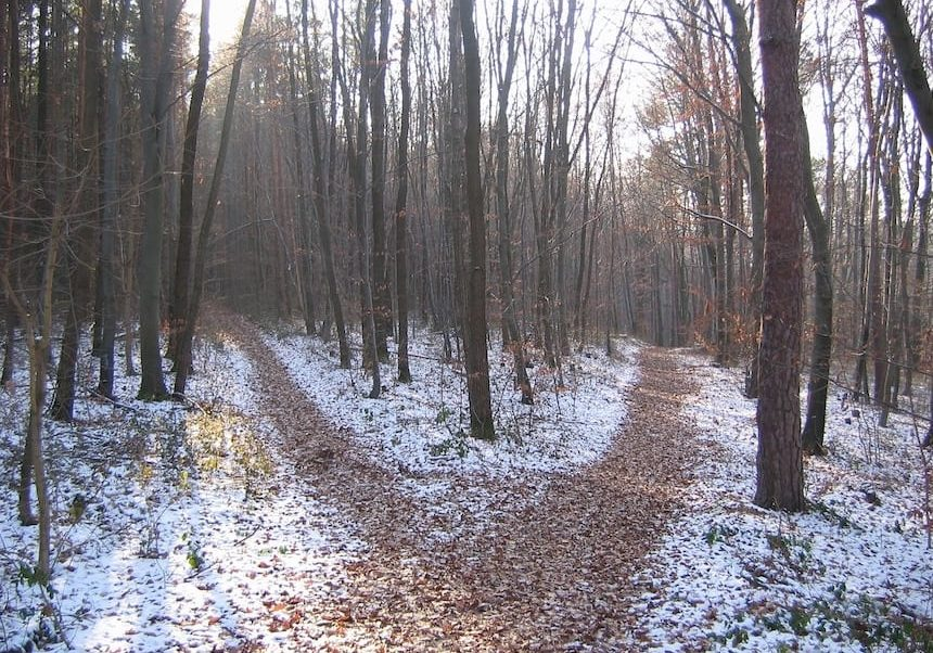 two paths in the wood